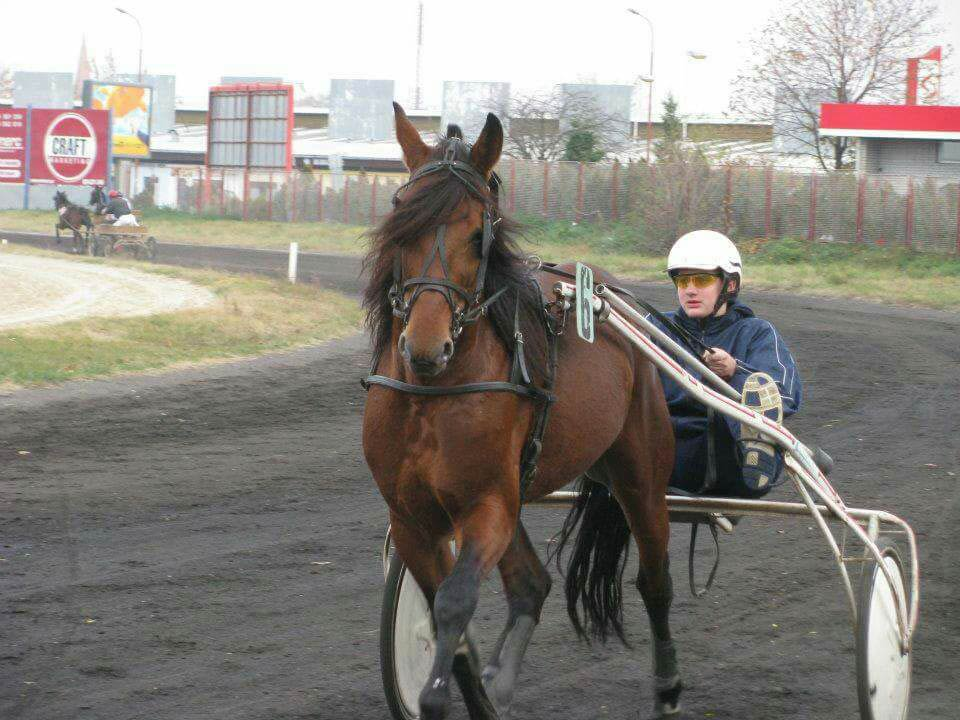 Nikola Jokic as a jockey
